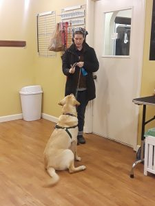 Goose learning to wait in Beginner Obedience at Altadena Valley Animal Clinic